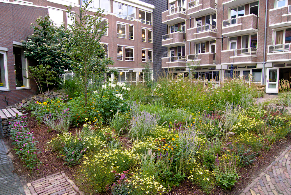 Perennial Meadow, city courtyard