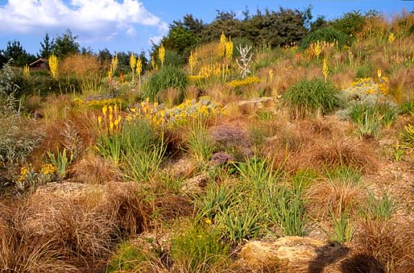 Lady Farm steppe perennial meadow