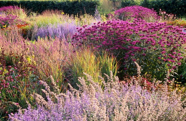 Scampston Hall, perennial meadow