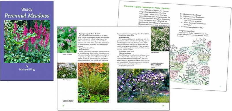 Shady Perennial Meadows eBook