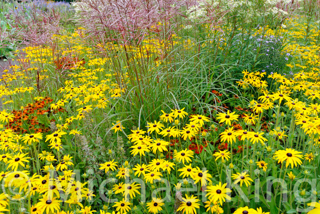 Success with perennials establishment and maintenance of for Planting plans with grasses
