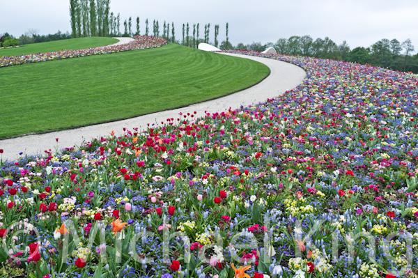 Tulips - Floriade 2012