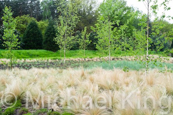 Ornamental grasses - Floriade 2012