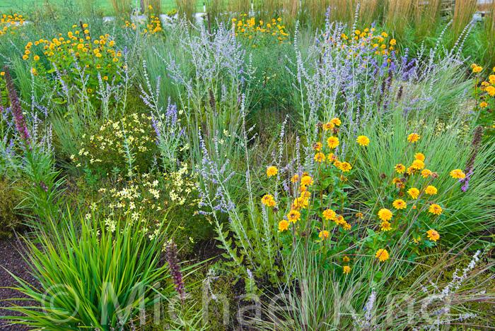 Perennial Meadow