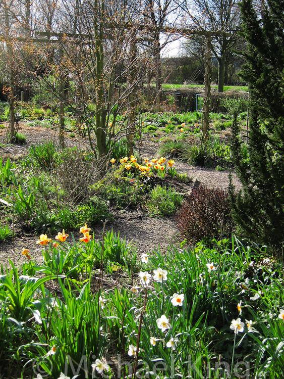 Amsterdam Garden