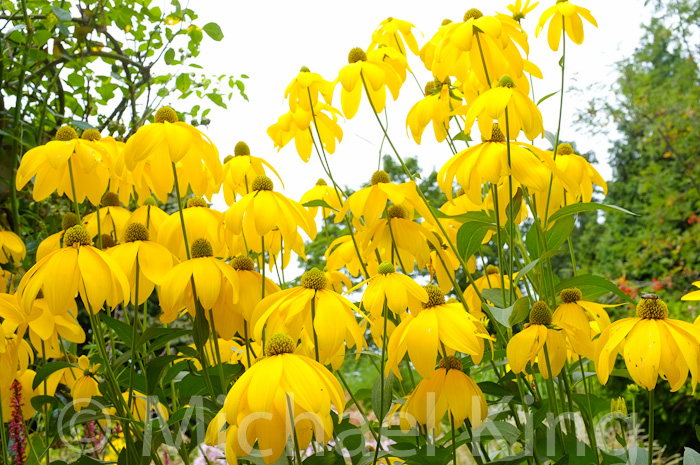 A Garden Month by Month August Perennial Meadows