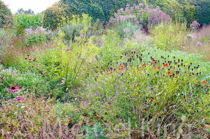 Oudolf Perennials