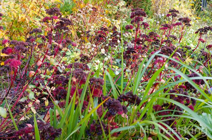 Perennial Meadows - October