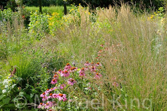 adding structure to perennial planting schemes perennial