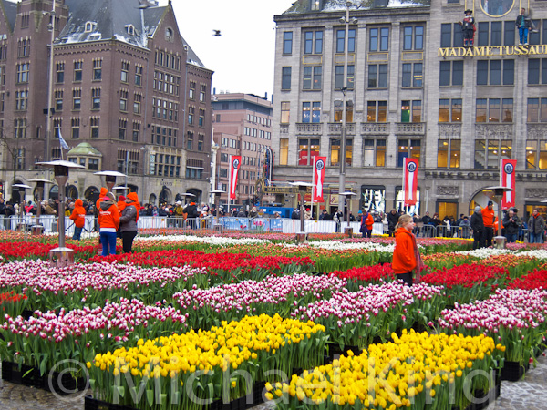 National Tulip Day Amsterdam 2013