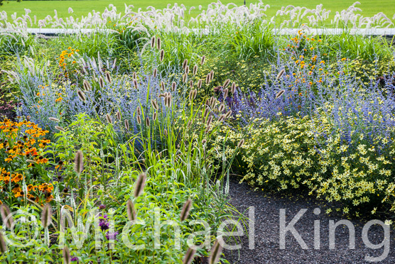 Naturalistic planting design Michael King