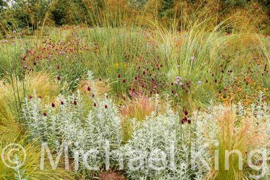Contemporary perennial planting concepts and practice for Planting schemes for small gardens