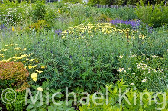 Mixed Perennial Planting