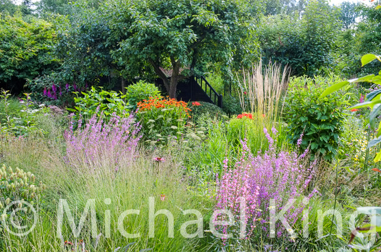 Michael King perennial meadow