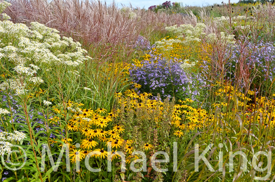 Prairie style perennial border designed by Michael King