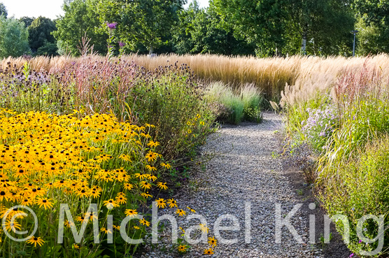 Perennial meadows by Michael King