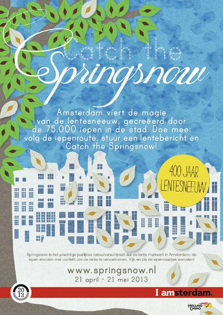 Elms in Amsterdam
