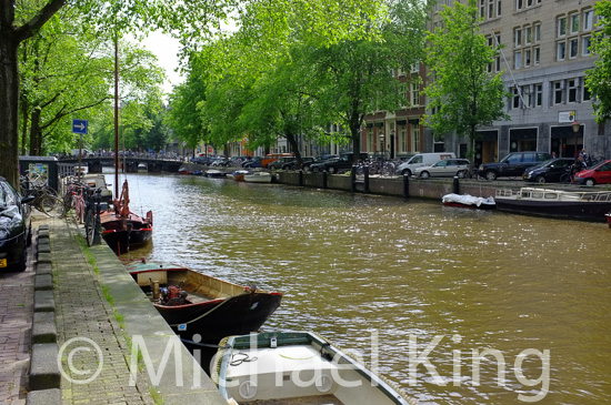 Elm trees in Amsterdam