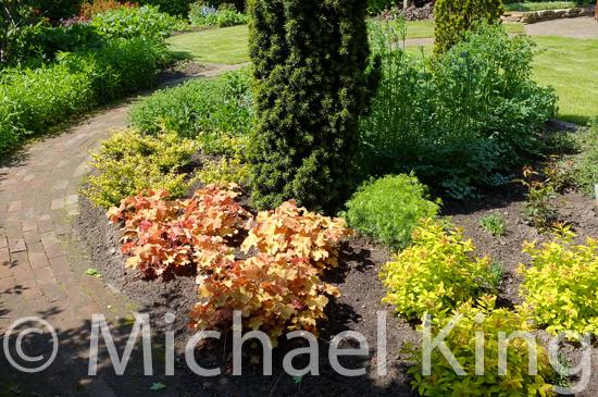 Shrub forms and foliage colour