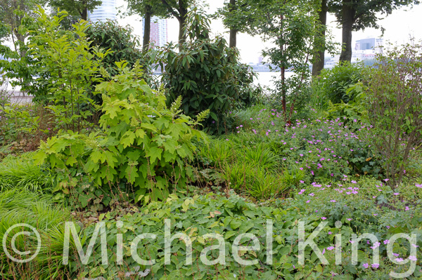 Widely spaced shrubs with a generous infill of ground covering perennials
