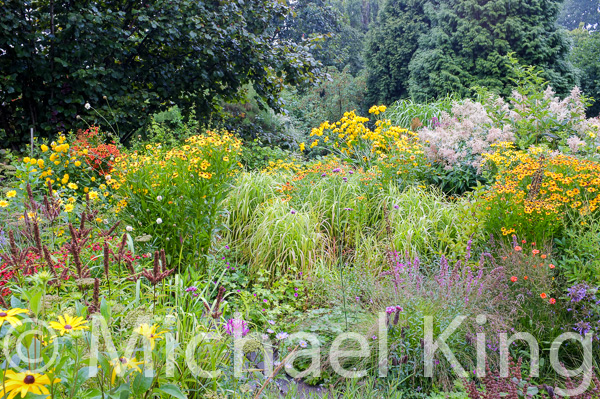 Late summer naturalistic perennial borders
