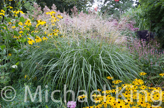 Late summer perennial flowers