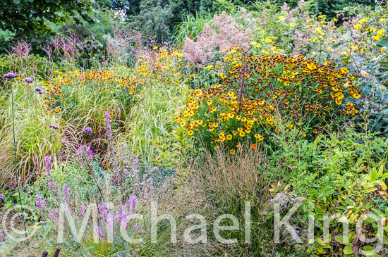 late summer perennials