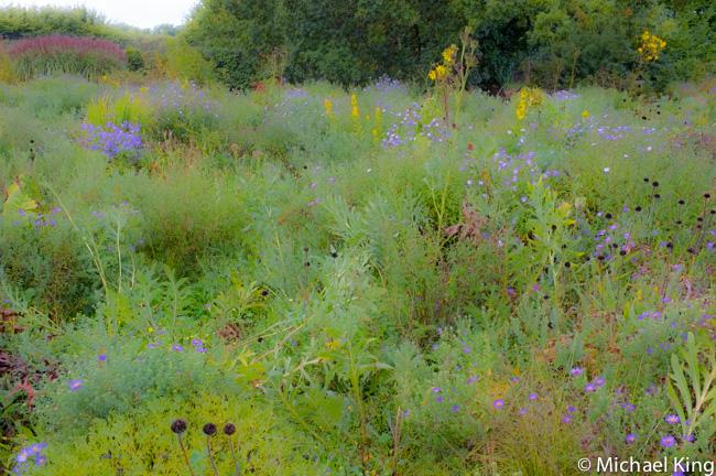 Naturalistic Planting Wisley