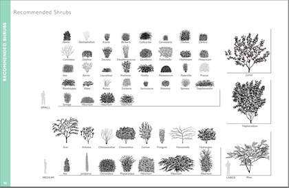 Recommended Shrub Features
