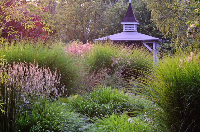 Gardening with grasses perennial meadows for Planting plans with grasses