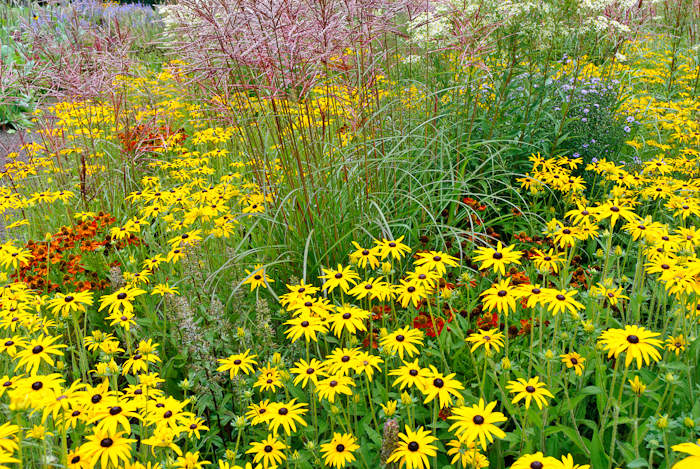 Perennial meadows design and plant perennials flowers for Grasses planting scheme