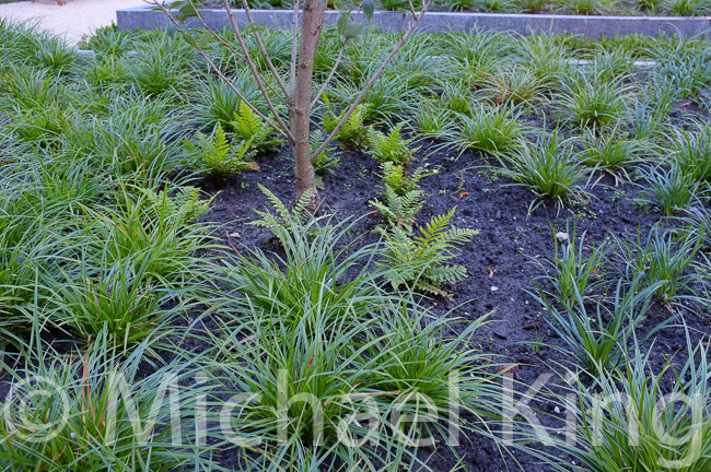 Perennial meadows design and plant perennials flowers for Soil king compost