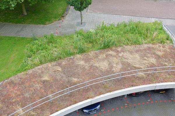 sedum roof and perennial meadows