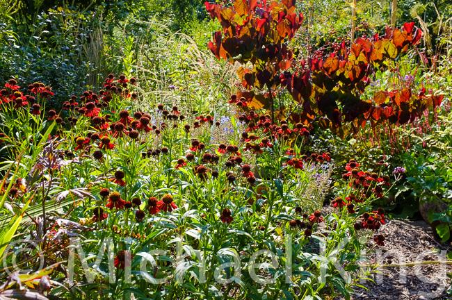 Perennial Meadows with shrubs