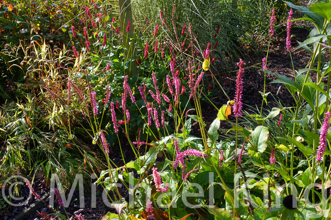 Perennials in Autumn