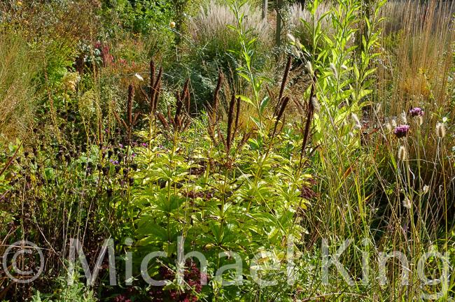 Perennials in Autumn