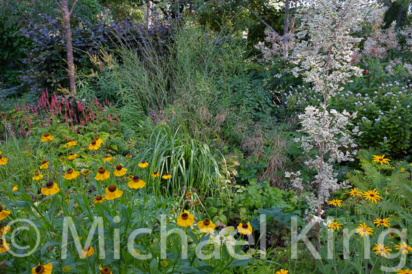Gardening with Grasses Molinia