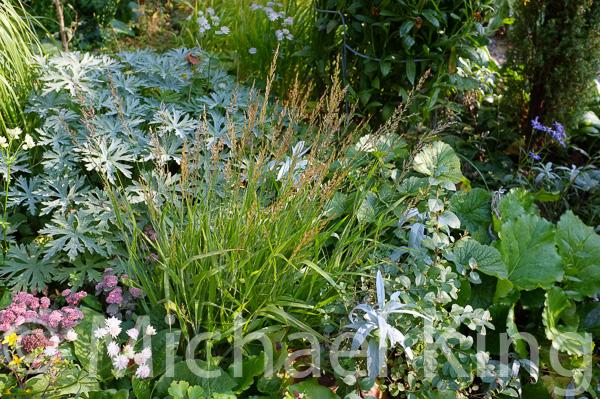 Gardening with Grasses Calamagrostis
