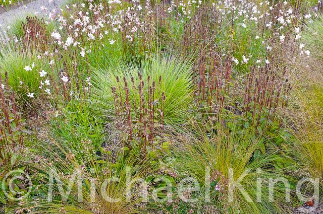 Perennial Meadows by Michael KIng