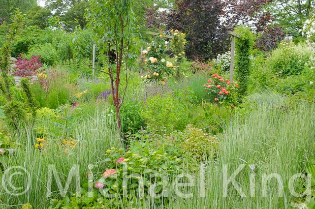 Grass Hedges