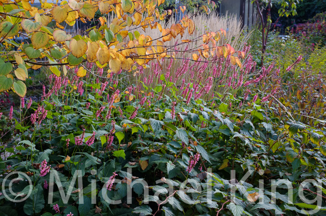 Perennial Meadow garden in Amsterdam