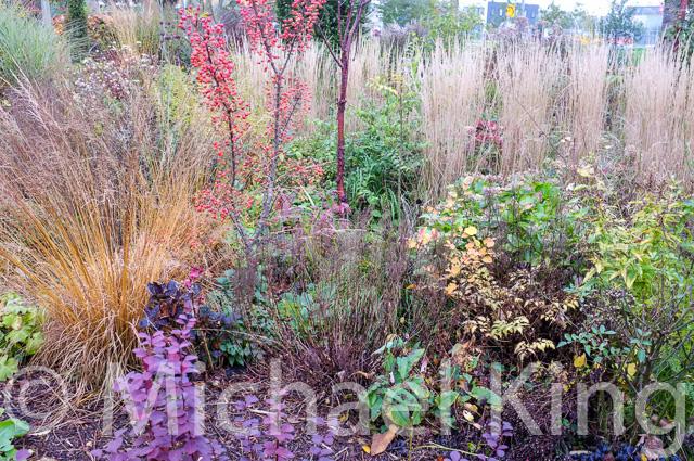 Perennial Meadow Amsterdam