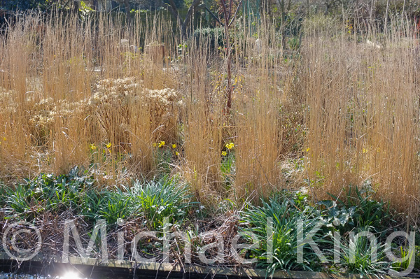 Perennial meadow garden in winter