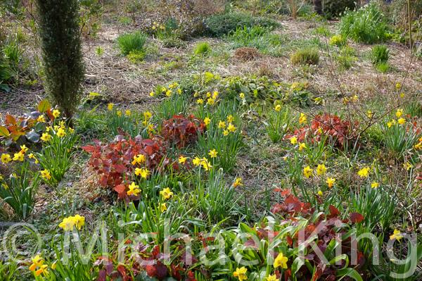 Perennial meadow garden in winter