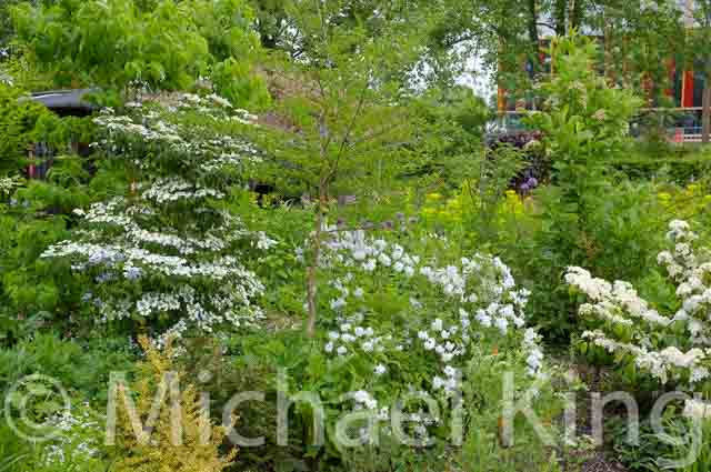 Shrubs in early summer