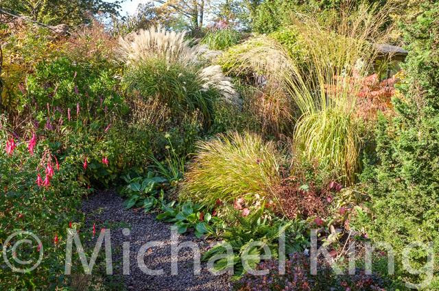 Autumnal tints in grasses