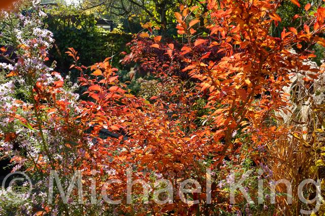 Perennial Meadow Garden