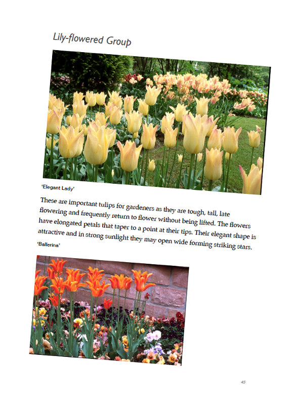 Tulips eBook