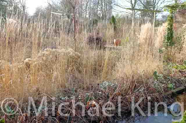 Perennial plants in winter
