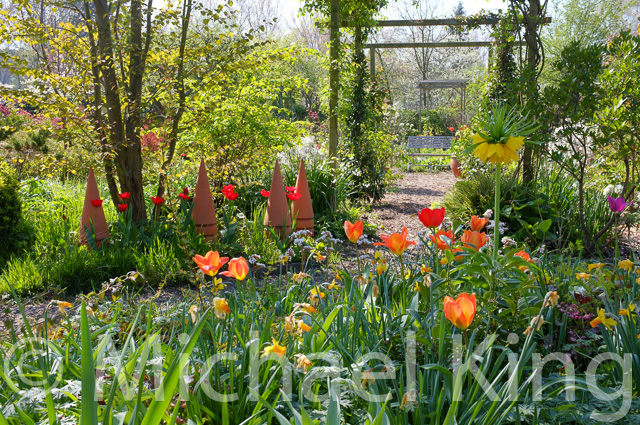 Tulips for garden borders